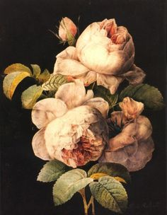 """Pierre-Joseph Redouté July 1759 in Saint-Hubert, Belgium – 19 June 1840 in Paris), was a Belgian painter and botanist, known for his watercolours of roses, lilies and other flowers at Malmaison. He was nicknamed """"The Raphael of flowers"""". Art Floral, Illustration Botanique, Illustration Art, Illustrations, Flower Canvas, Flower Art, Life Flower, Poster Mural, Impressions Botaniques"""