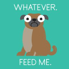 """""""The Pugly Truth""""~David Olenick"""