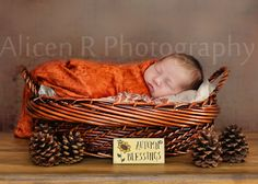 Autumn Newborn Baby Pose Idea ... Newborn Photography by Alicen R Photography