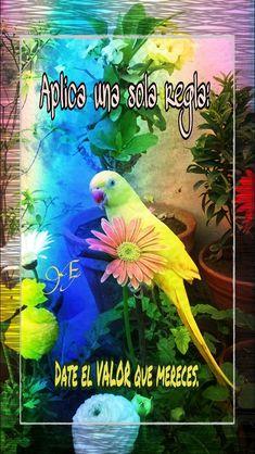 Parrot, Animation, Fish, Pets, Cabo, Affirmations, Self Esteem, Prayers, Christians