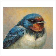 Wildlife Paintings, Wildlife Art, Bird Illustration, Character Illustration, Watercolor Paintings, Bird Paintings, Barn Swallow, 3d Street Art, Dutch Artists