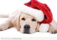 Christmas puppy - goaww.com