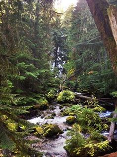 Willamette National Forest. Stretching more than 100 miles throuch the Western Slopes of the Cascades, the Willamette hosts Wilderness areas, Wild rivers and  mountain peaks.