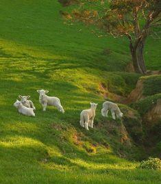 Green Animals, Farm Animals, Happy Animals, Flora Und Fauna, Nature Aesthetic, Cute Little Animals, Farm Life, Faeries, Little Babies
