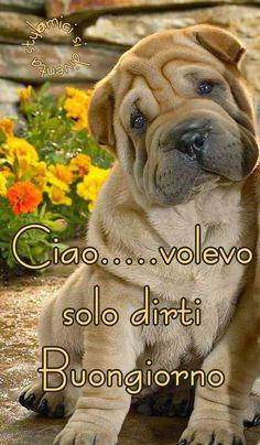 Italian Memes, Good Morning, Labrador Retriever, Animals, Messages, Frases, Sink Tops, Photos, Italy