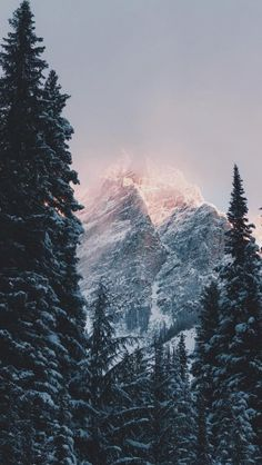 Winter-Decorating-310x550.jpg (310×550)