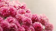 розовые, вода, букет, цветы, капли, мелкие