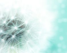 botanical photography dandelion nursery decor 8x10 8x12 whimsical dandelion art print teal abstract photography bokeh dreamy mint pastel