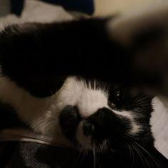 Little cutie #kitten #blackandwhite #catsofinstagram #hello #cute #fluffy #furry