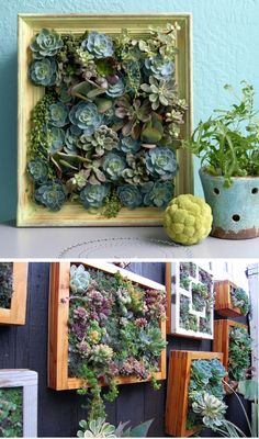 Vertical succulent gardens