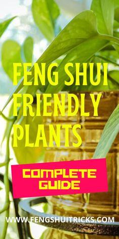 #FengShui #Friendly #Plants For #GoodLuck, #Wealth Feng Shui Lucky Bamboo, Feng Shui Bedroom Tips, Feng Shui Plants, Lucky Plant, Chinese Culture, Good Luck, Abundance, Wealth, Positivity