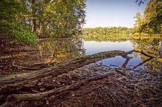 The Shores of Flint Creek Island - The beautiful shores of Flint Creek Island in Wheeler National Wildlife Refuge