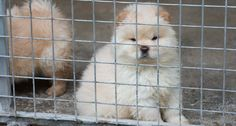 The designer puppies spending Christmas behind bars - Dogs Trust
