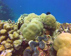 Exploring the Great Barrier Reef #greatbarrierreef #gbr #reef #scubadiving #diving #australia #qld by sammybourke http://ift.tt/1UokkV2