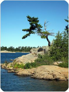 """Windswept Pine on Georgian Bay, Ontario My mental """"happy place"""" Get Outdoors, The Great Outdoors, Landscape Photos, Landscape Photography, Nature Pictures, Cool Pictures, Algonquin Park, Canada Images, Amazing Photography"""