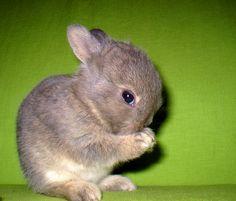 baby bunny... too precious