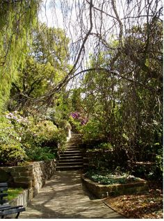 Royal Tasmanian Botanical Gardens, Hobart, Tasmania, Australia