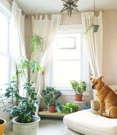Indoor garden of succulents (jade plants) and a Meyer lemon tree