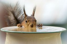 Photographer Captures Cute Squirrels Through His Window