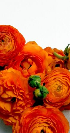 Kelly Lynn Jones, Flower Study of Ranunculus.