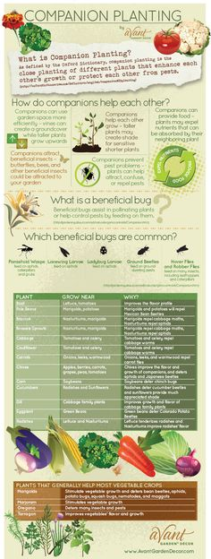 Companion planting infographic - for 2014's garden. Maximize the space we have and use companion planting for improvements in soil and crop quality.