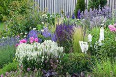 Purple Garden, Green Garden, Lavandula Angustifolia, Beautiful Flowers Garden, Plants, Outdoor, Image, Gardening, Google