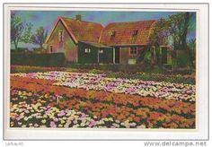 Postkaarten / limmen - Delcampe.net
