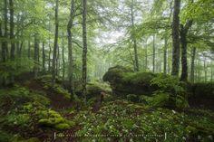 Walking in Eden by Jontake . . on 500px