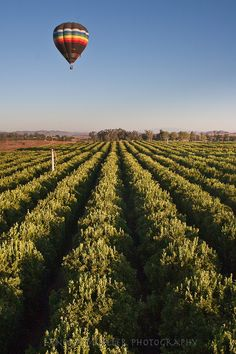 Ballooning over orange groves in Temecula Valley, California, i have a family member that gets to see this visited on a regular basis.