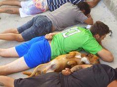 É notícia: Cachorro se deita ao lado de suspeitos durante abo...