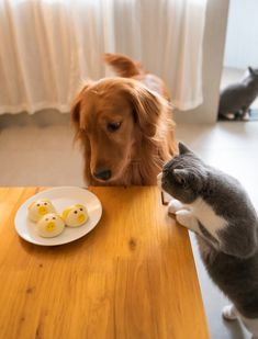 Can Dogs Eat Cat Food? Is Cat Food Safe For Dogs? Dog Nutrition, Can Dogs Eat, Cat Food, Dog Food Recipes, Your Dog, Dog Cat, Corgi, Canning, Cats