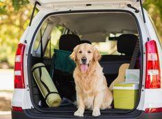 Se você e sua família não deixam o pet quando saem de férias, vale a pena conferir algumas dicas para viajar em segurança com o seu bichinho de estimação.
