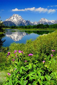 Oxbow Bend - Snake River, Wyoming