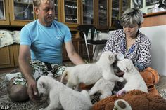 Adopted: Mr Zubkov and his wife Olga care for the animals in his office at the zoo