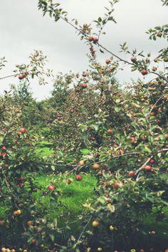 Somerset Apple Orchard - foodand.co.uk