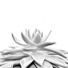 Succulent #Print (Black and White) for Instant Download. Succulent #Printable (Digital Photography) to Decorate or Update your Office or Home Decor. On Trend, Affordable & Ea... #handmade #décor #poster #blackandwhite #print #printable #art #etsy #wallart #love ➡️ http://jto.li/T9Wyf