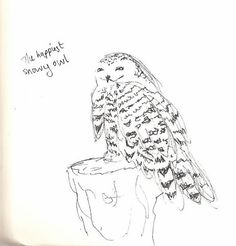 The happiest Snowy Owl - at Camperdown Wildlife Centre Sketchbook Drawings, Sketches, Observational Drawing, Draw Animals, Snowy Owl, Animal Drawings, Centre, Wildlife, Animation