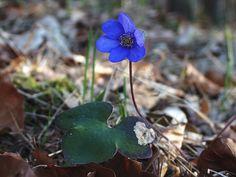 Vůně bylin, online program o bylinkovém tvoření Program, Plants, Flora, Plant
