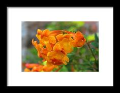orange, flower, nature, blossom, michiale schneider photography