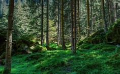 forest - Google Search