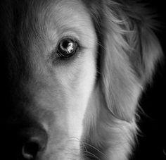 L'ANIMAL... Un regard... Une intelligence suprême, une empathie....