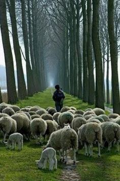 ".""My sheep hear My voice, and I know them, and they follow Me. I give them Eternal Life, and they shall never perish. No one shall snatch them out of my hand. John 10:27-28"