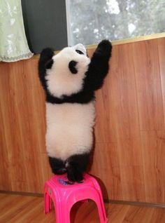 almostttt there ! pandas <3