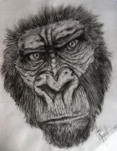 Gorilla Sketch Drawing Gorilla Sketch by dr Carrot