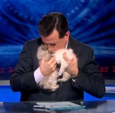 Steven Colbert and Kittens!
