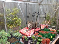 Grow bag cat by PLH
