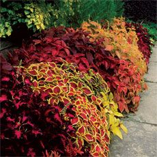 How to Propagate Fall Perennials into Spring Plants