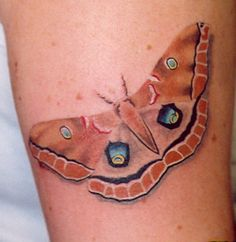 Beautiful moth tattoo--very life-like! Tattoo Shop, I Tattoo, Luna Moth Tattoo, Hairdresser Tattoos, Bad Tattoos, Butterfly Wings, Butterfly Tattoos, Piercing Tattoo, Piercings