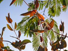 30 Jan Red leaves