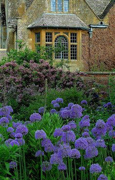 Alliums at Hidcote by Jayembee69 on Flickr.
